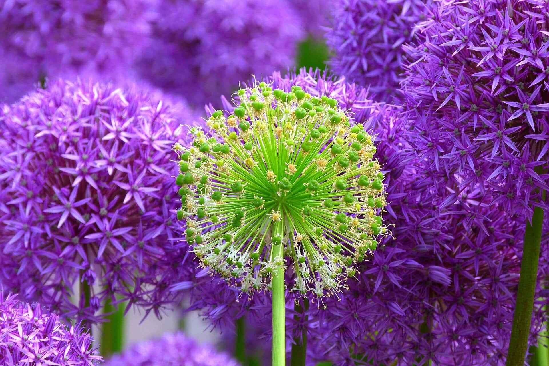 Blumen - Herz und Seele jedes Gartens