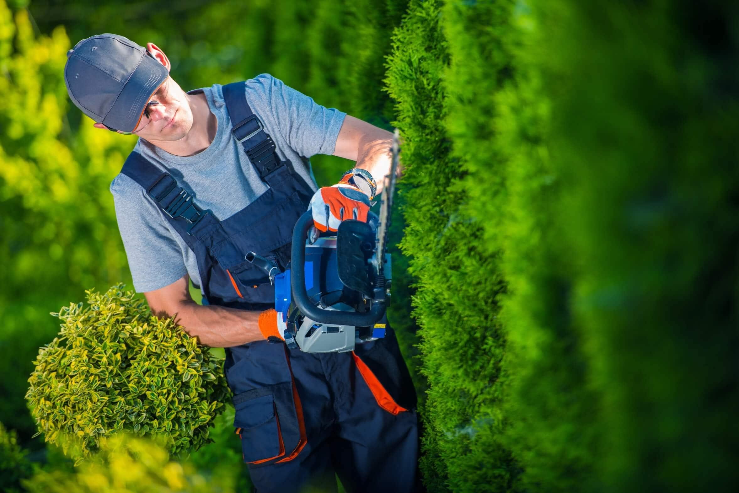 Gärtner trimmt eine Hecke