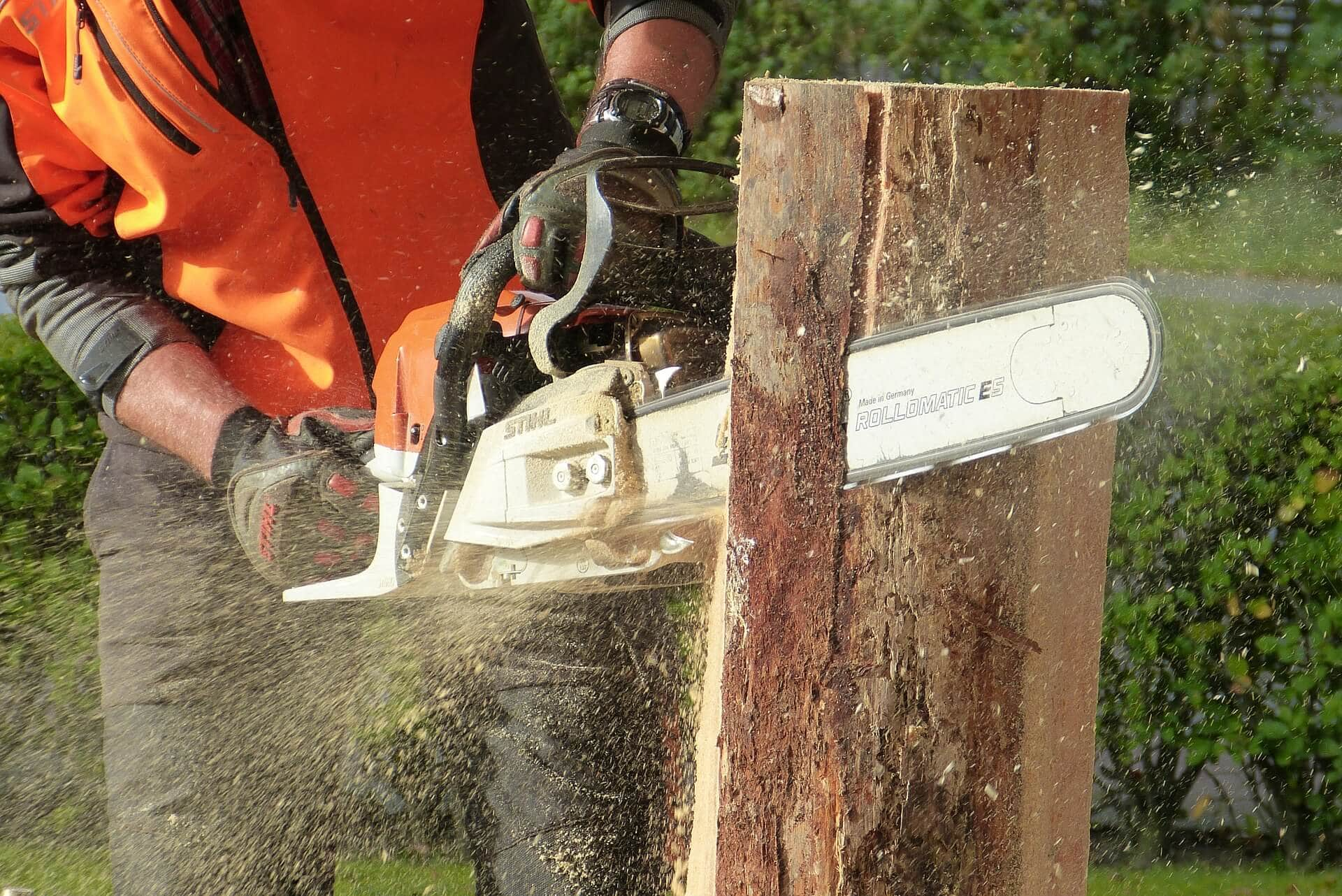 Baumschnitt mit Motorsäge